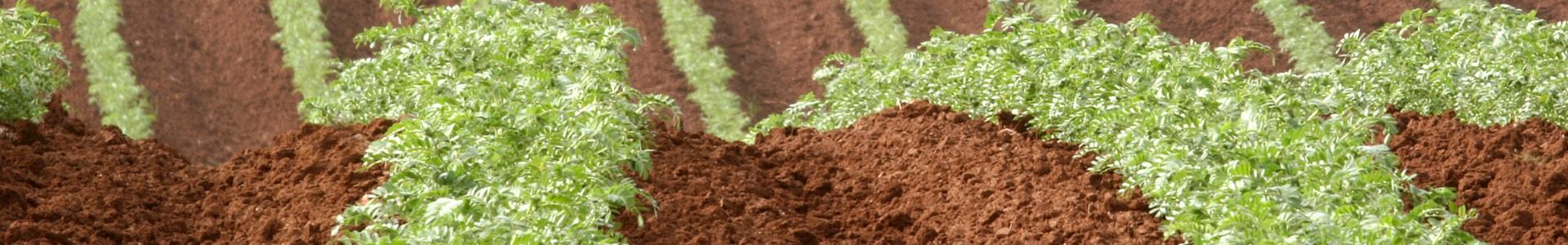 agricultura-netafim-s