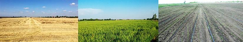 Ferma Agrobusiness