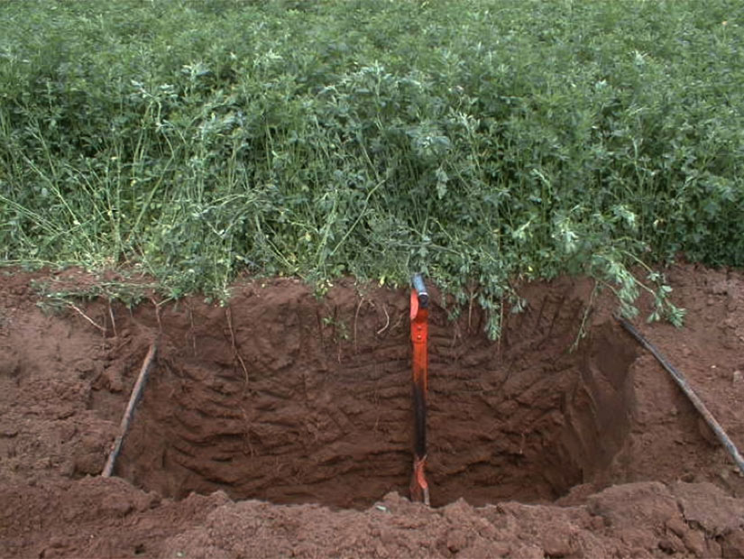 sistemul subsolier de irigare prin picurare netafim